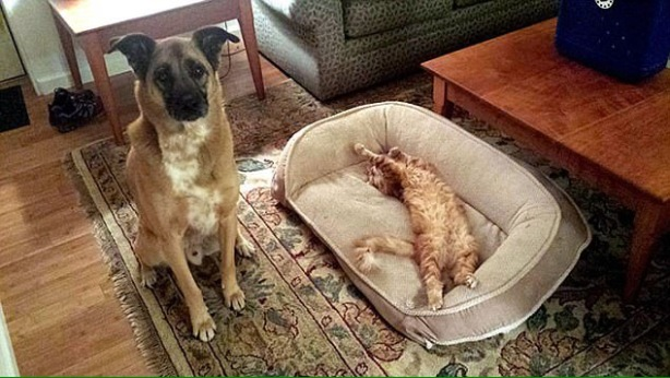 CATS PINCHING DOG BEDS